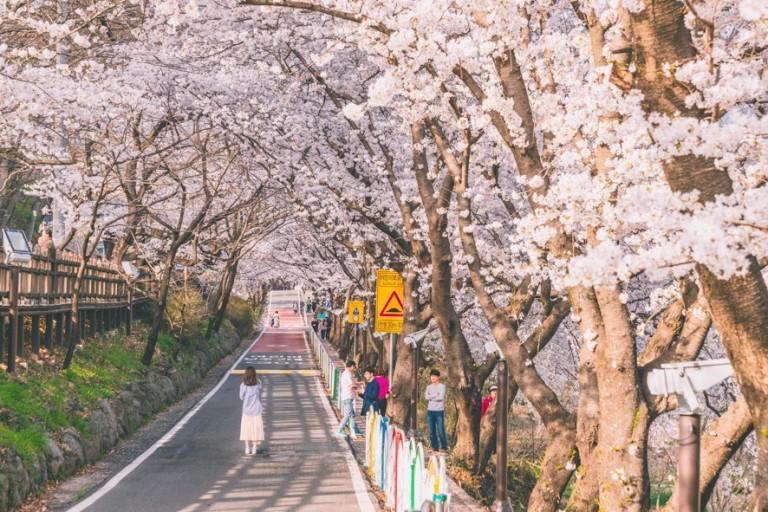 벚꽃축제(차로 5분)